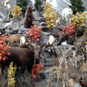 Scheels Taxidermy Mountain